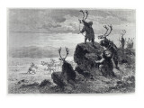 Reindeer Hunting in the Stone Age  Illustration from 'L'Homme Primitif'  by Louis Figuier