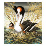 Great Crested Grebe  Illustration from &#39;Once Upon a Time&#39;