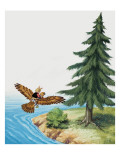 Rabbit Flying on a Bird  Illustration from &#39;Brer Rabbit&#39;