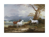 Lord Macdonald's Mares on the Grounds of Thorpe Hall  Rudston  Yorkshire  1836