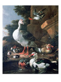 Waterfowl in a Classical Landscape  17th Century