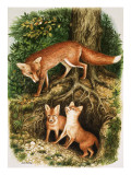 The Fox Family  Illustration from &#39;Once Upon a Time&#39;  1971