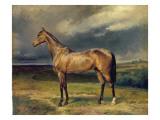 Abdul Medschid' the Chestnut Arab Horse  1855