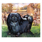 Black Knight the Pekinese Dog Owned by Artist Sir Alfred Munnings