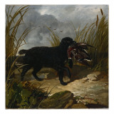 An Irish Water Spaniel Retrieving a Mallard Drake  1849