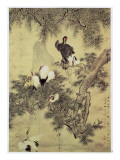 Eight Red-Crested Herons in a Pine Tree  1754