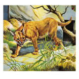 Who&#39;s Who in the Zoo: the King&#39;s Pet Cat