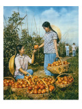 Chinese Food Production: Ripe Tomatoes  1959