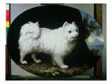 Portrait of Mrs French's White Lap-Dog  1782