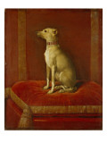 One of Frederick Ii's Italian Greyhounds