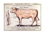 Veal: Diagram Depicting the Different Cuts of Meat