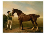 Groom Feeding a Bay Hunter in a Landscape