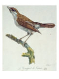 The Nightingale of France  C1830
