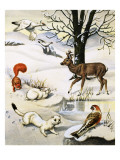 Assorted Animals in the Winter