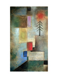 Small Picture of Fir Trees  1922