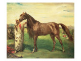 Hadji  an Arabian Stallion  1853