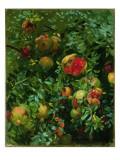 Pomegranates  Majorca  C1908