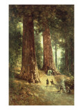 In the Redwoods  1899