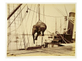 Shipping a Burmese Elephant