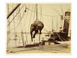 Shipping a Burmese Elephant