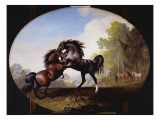 Stallions Fighting  1781