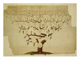 Bach Family Tree  C1750-1770