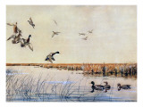 Ducks Landing  1919