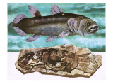 Coelacanth and its Fossil