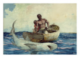 Shark Fishing  1885