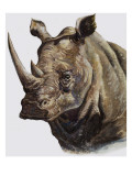 White Rhinoceros  1980