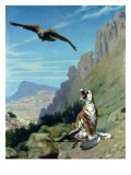 Tiger and Vulture