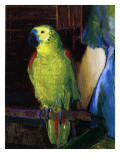 Parrot  1915