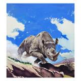 Rhinoceros  1962