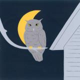 Baby Owl I