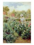 Dahlias  1896