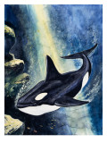 Killer Whale