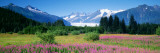 Fireweed  Mendenhall Glacier  Juneau  Alaska  USA