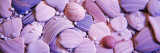 Close-up of Sea Shells