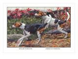 English Foxhound and American Foxhound
