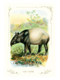 The Tapir
