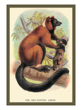 The Red-Ruffed Lemur