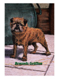 Typical Brussels Griffon Champion