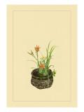 Daylily  Miscanthus  Japanese Glove Flower  and Patria Scabiasaegolia
