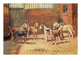 Welsh Hounds