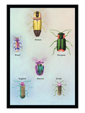 Beetles of America  Britain  Brazil  England and Europe