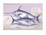 Plain Bonito and Swordfish