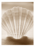 Luminescent Irish Deep Seashell