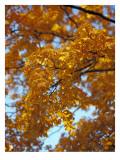 Golden Autumn Leaf Cascade
