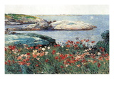 Poppies  Isle of Shoals