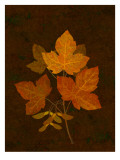 Autumn Leaves II